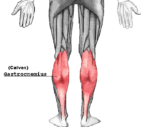 Building Large Calf Muscles